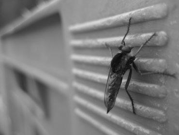 Insektenschutz auf Maß